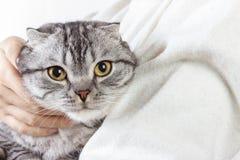 Soin d'animaux familiers Jeune femme jugeant le chat à la maison Chat mignon chez des mains de la femme Amour animal Amant de cha Photos stock
