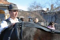Soin de cheval Photos libres de droits