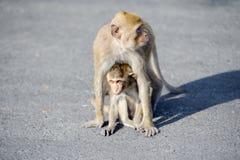 Soin de mère de singe pour leurs enfants Photos libres de droits