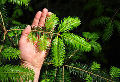 Soin de sylviculture de forêt images stock