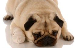 Soin vétérinaire Photographie stock