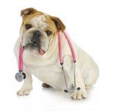 Soin vétérinaire Photos libres de droits