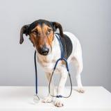 Soin vétérinaire Images libres de droits