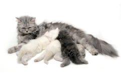 Soins de chat photographie stock libre de droits