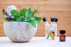 Soins de santé et phytothérapie alternatifs Herbes et aro frais photos stock