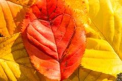Soins du concept de planète du coeur d'amour dans une feuille Photo libre de droits