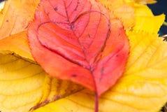Soins du concept de planète du coeur d'amour dans une feuille Photographie stock libre de droits