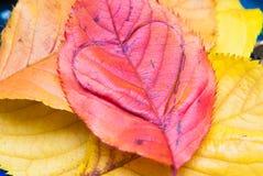 Soins du concept de planète du coeur d'amour dans une feuille Image libre de droits