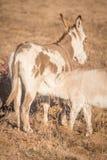 Soins miniatures nouveau-nés d'âne image stock
