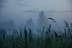 Soirée brumeuse Photo stock