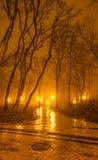 Soirée brumeuse en parc Images libres de droits