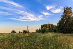 Soirée d'été dans le domaine, herbe, fleurs sauvages, nuages légers sur un ciel bleu Images stock