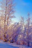 Soirée d'hiver Photographie stock