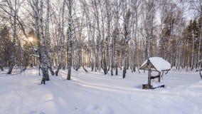 Soirée d'hiver dans la forêt de bouleau Images libres de droits