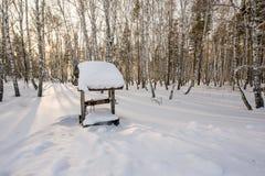Soirée d'hiver dans la forêt de bouleau Photos libres de droits