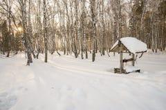 Soirée d'hiver dans la forêt de bouleau Image libre de droits