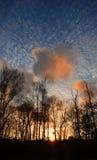 Soirée dans la forêt Photos libres de droits