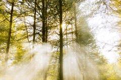 Soirée dans les bois Photographie stock libre de droits