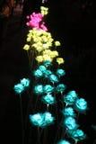 Soirée de fleur dans l'éclairage de jardin Photographie stock libre de droits