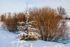Soirée de l'hiver images stock