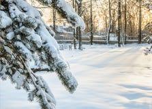Soirée ensoleillée de l'hiver photo libre de droits