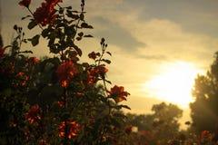 Soirée ensoleillée en parc Photos libres de droits