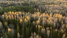 Soirée ou matin dans la vue aérienne de forêt d'automne banque de vidéos