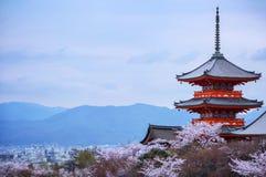 soirée Pagoda avec le ciel et les fleurs de cerisier sur le fond Image stock