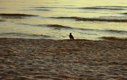 Soirée par la mer Image stock