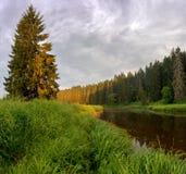 Soirée sur la rivière de forêt Photo stock
