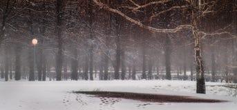 Soirée tranquille en parc Photo stock