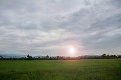Soirée verte de champ au coucher du soleil photographie stock libre de droits