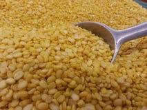 Soja amarilla de la semilla Imágenes de archivo libres de regalías