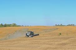 Soja Bean Harvest Stock Afbeelding