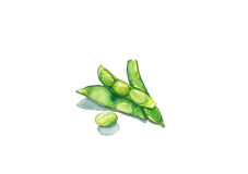 Soja verde Foto de archivo libre de regalías