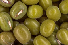 Soja vert (glycine maximum) Photos libres de droits