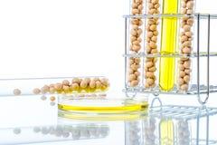 Sojaböna som ändras genetiskt, växtcell Royaltyfria Bilder