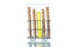 Sojaböna som ändras genetiskt, växtcell Royaltyfria Foton