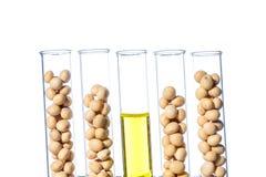 Sojaböna som ändras genetiskt, växtcell Arkivfoton
