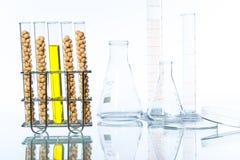 Sojaböna som ändras genetiskt, växtcell Royaltyfri Fotografi