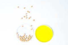 Sojaböna som ändras genetiskt, växtcell, Petri Dish Royaltyfria Foton