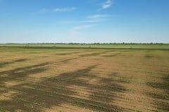 Sojabönafält för flyg- sikt Flyg- sikt för ung sojaböna Fotografering för Bildbyråer
