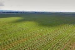 Sojabönafält för flyg- sikt Flyg- sikt för ung sojaböna Arkivbild