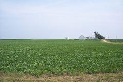 Sojabönafält med lantbrukarhemmet Arkivfoto