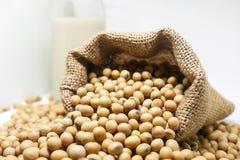 Sojabönor i hampasäck hänger löst på vit bakgrund Fotografering för Bildbyråer