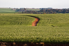 Sojabohnenöl-Bohnen-Felder in Rio Grande tun Sul Brasilien Stockbild