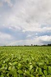 Sojabohnenöl-Regenbogen Stockfoto