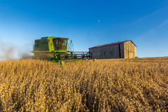 Sojabohnen-Landwirtschaft Lizenzfreies Stockbild