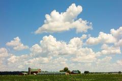 Sojabohnen und Mais, die in der Sommerzeit wachsen Lizenzfreies Stockbild