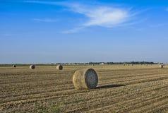 Sojabohnenfeld nach Ernte lizenzfreie stockfotos